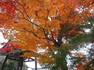 七色紅葉.jpg