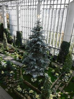 奇跡の星の植物館�@.jpg