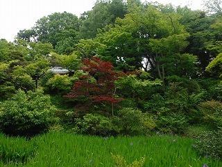根津美術館庭園.jpg